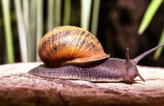 Perbedaan Hewan Vertebrata dan Invertebrata