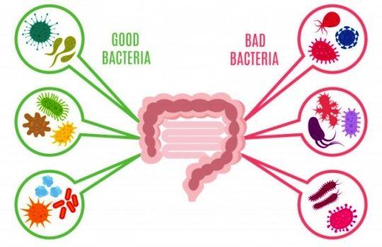 Bakteri yang Menguntungkan Manusia dan Berperan Penting dalam Kehidupan